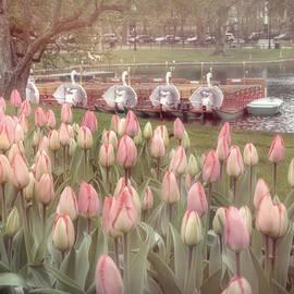 Joann Vitali - Swan Boats and Tulips - Boston Public Garden