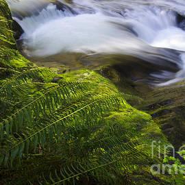 Bob Christopher - Sweet Creek Oregon 11