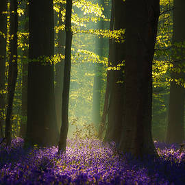 Martin Podt - The Blue Forest