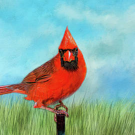 Cathy Kovarik - The Cardinal