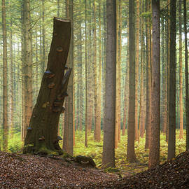 The One - Martin Podt