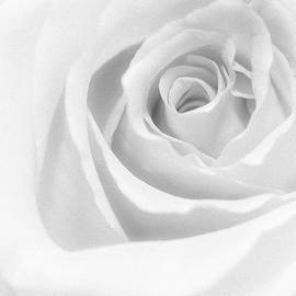Diane Hawkins - The rose