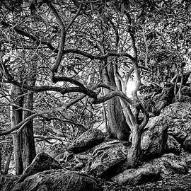 Lilia D - The tree