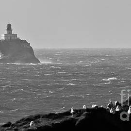 Nick  Boren - Tillamook Rock Lighthouse