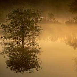Liang Li - Tree