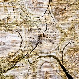 Tree trunk - Tom Gowanlock