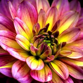 Jijo George - Tropical flower 21