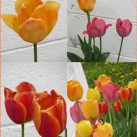 Sonali Gangane - Tulip Time