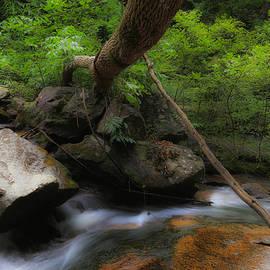 Todd Wise - Twin Falls stream