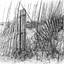 Marcia Colelli - Tybee Beach