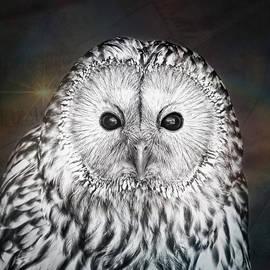 Ural owl - Tom Gowanlock