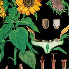 Vintage Botanical - Mindy Sommers
