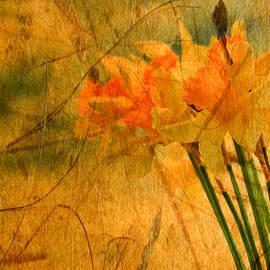 Boyan Dimitrov - Vintage Daffodil flowers