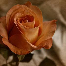 Richard Cummings - Vintage Orange Rose