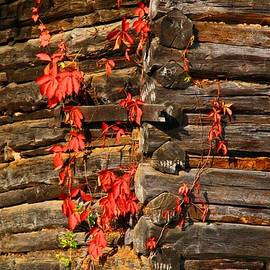 Kathryn Meyer - Virginia Creeper