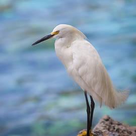 Amy Jackson - White Egret
