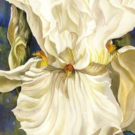 Alfred Ng - White Iris With Blue