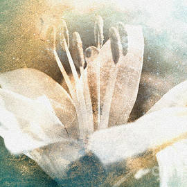 Lali Kacharava - White Lily