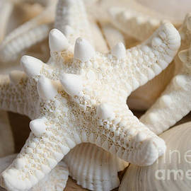 Andrea Anderegg  - White starfish