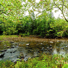 Thomas R Fletcher - Williams River Summer Rain