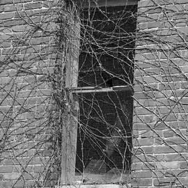 Dwight Cook - Window