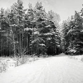 Julie Woodhouse - Winter forest