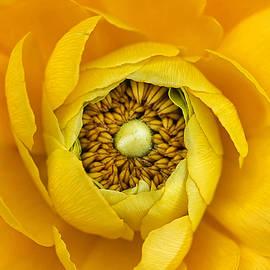 Darren Fisher - Yellow