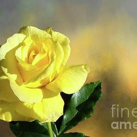 Janette Boyd - Yellow Rose of Texas
