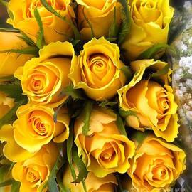 Wonju Hulse - Yellow roses