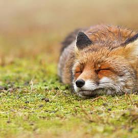 Roeselien Raimond - Zen Fox Series - Happy Fox is Happy II
