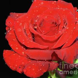 Elvira Ladocki - Red Rose