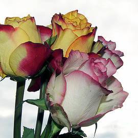 Elvira Ladocki - Beautiful Roses