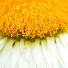 Jijo George - Flower blossom