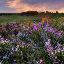 New Forest - England - Joana Kruse