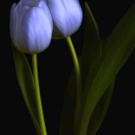 Dania Reichmuth - Tulips