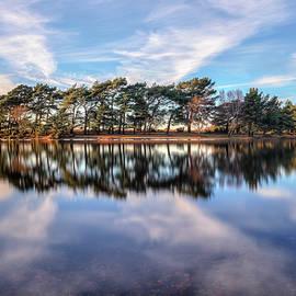New Forest - England - Joana Kruse