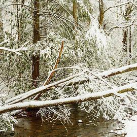 Thomas R Fletcher - Winter along Cranberry River