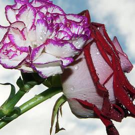 Elvira Ladocki - Two Flowers