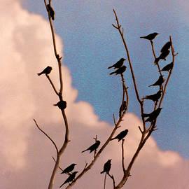 Steve Karol - 19 Blackbirds