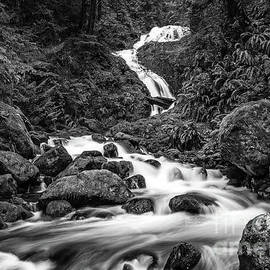 Jamie Pham - Beautiful Bunch Creek Falls in the Olympic National Park of Wash