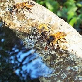 Michael Dillon - 2 Bee
