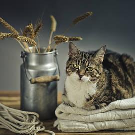 Nailia Schwarz - Cat Portrait