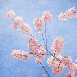 Kim Hojnacki - Cherry Blossoms