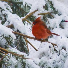 Cathy Kovarik - Cold Cardinal