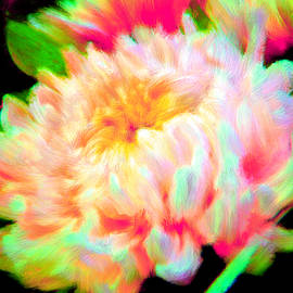 Bruce Nutting - Cool Colorful Chrysanthemum