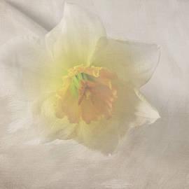 Lynn Bolt - Daffodil