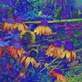 Rich  Ray Art - Echinacea Healing Flower