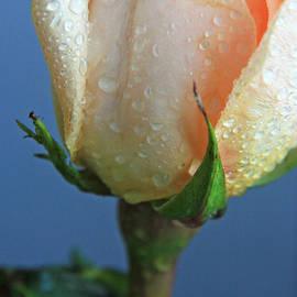 Lali Kacharava - Flower