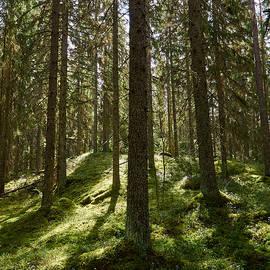 Jouko Lehto - Forest