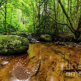 Thomas R Fletcher - Hills Creek Monongahela National Forest